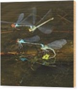 Red Eyed Damselflies Flying And Mating Party Wood Print