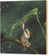 Red-eyed Tree Frog In The Rain Wood Print by Michael Durham