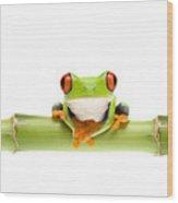 Red-eyed Treefrogs Wood Print