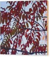 Red Fall Colors Wood Print