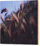 Red Feathers Wood Print