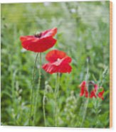 Red Field Poppies Wood Print