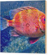 Red Fish Blue Fish Wood Print