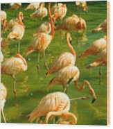 Red Florida Flamingos In Green Water Wood Print