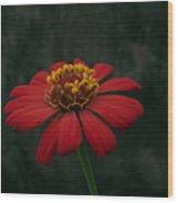 Red Flower 5 Wood Print