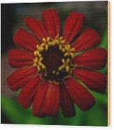 Red Flower 8 Wood Print