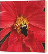 Red Flower And Bee Wood Print