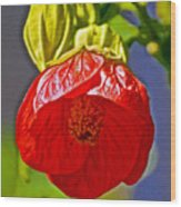Red Flower At Pilgrim Place  In Claremont-california Wood Print