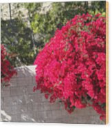 Red Flower Bushes Wood Print