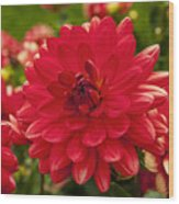Red Flower Close Up Wood Print