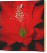 Red Flower For You Wood Print