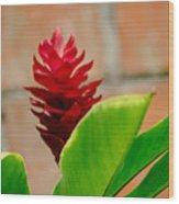 Red Flower IIi Wood Print