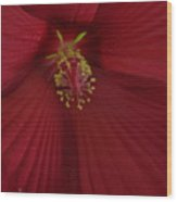 Red Passion Wood Print