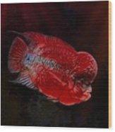 Red Flowerhorn Cichlid Wood Print