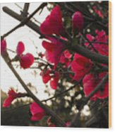 Red Flowers At Sunset Wood Print
