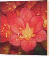 Multiple Red Flowers In Bloom Wood Print