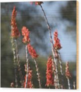 Red Flowers In Clouds Wood Print