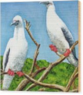 Red Footed Booby #255, Wood Print