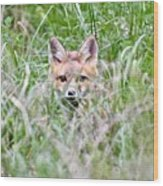 Red Fox Baby Hiding Wood Print