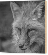 Red Fox In Black And White Wood Print