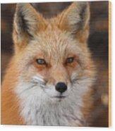 Red Fox In Winter Ruff Wood Print
