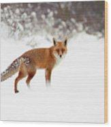 Red Fox In Winter Wonderland Wood Print