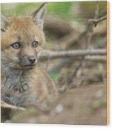 Red Fox Kit Wood Print