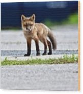Red Fox Kit On Road Wood Print