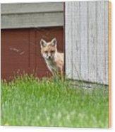 Red Fox Kit Peaking Around Old Barn Wood Print
