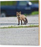 Red Fox Kit Standing On Old Road Wood Print