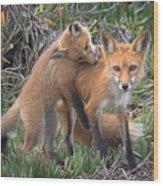 Red Fox Mama's Love Bite Wood Print