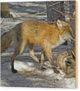 Red Fox Mommy And The Cutest Puppy Wood Print
