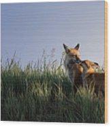 Red Fox Morning Wood Print