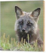 Red Fox Morph Wood Print