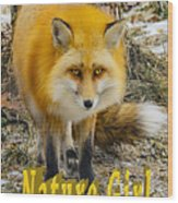 Red Fox Nature Girl Wood Print