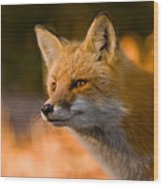 Red Fox Pictures 118 Wood Print