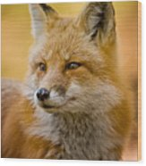 Red Fox Pictures 131 Wood Print
