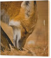 Red Fox Pictures 164 Wood Print