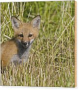 Red Fox Pictures 19 Wood Print