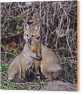 Red Fox Pictures 65 Wood Print