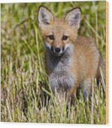 Red Fox Pictures 7 Wood Print