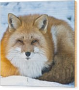 Red Fox Pictures 98 Wood Print