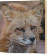 Red Fox Portrait 2 Wood Print
