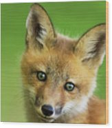 Red Fox Pup Wood Print