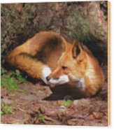 Red Fox Resting Square Wood Print