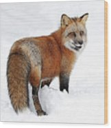 Red Fox Winter Wood Print