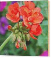 Red Fresh Geraniums Wood Print
