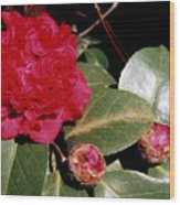 Red Frilly Camillia Wood Print