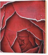 Red Frosty Metal Rose Wood Print