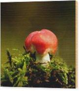 Red Fungus Wood Print